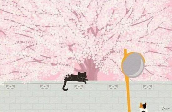 孤独的猫 图片,猫孤独背影唯美图片